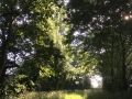 Views from walks around Flowton